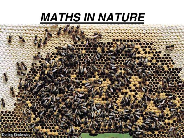 Maths In Nature Essay Sample - image 9