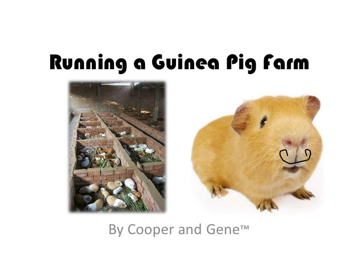 Running a Guinea Pig Farm     By Cooper and Gene™