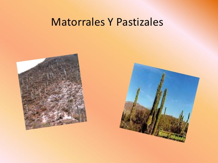 Matorrales Y Pastizales <br />