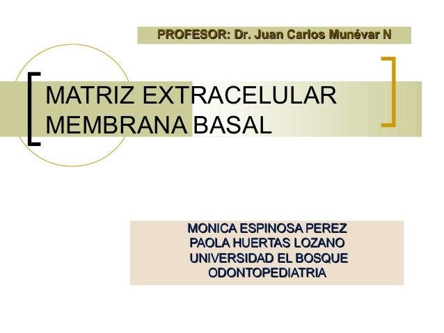PROFESOR: Dr. Juan Carlos Munévar NMATRIZ EXTRACELULARMEMBRANA BASAL           MONICA ESPINOSA PEREZ           PAOLA HUERT...