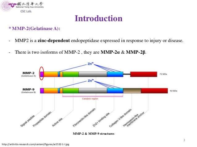Matrix Metalloproteinase 2 MMP Attenuates Brain Tumour Growth Fe