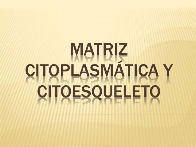 MATRIZ  CITOPLASMÁTICA Y  CITOESQUELETO