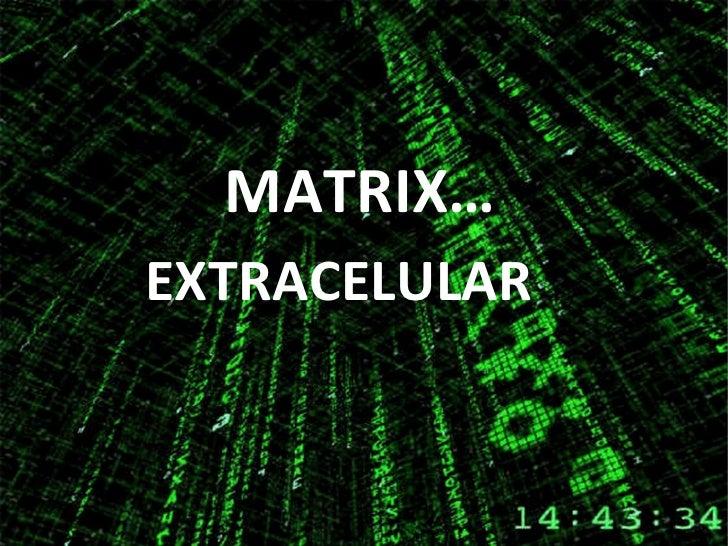 MATRIX… EXTRACELULAR