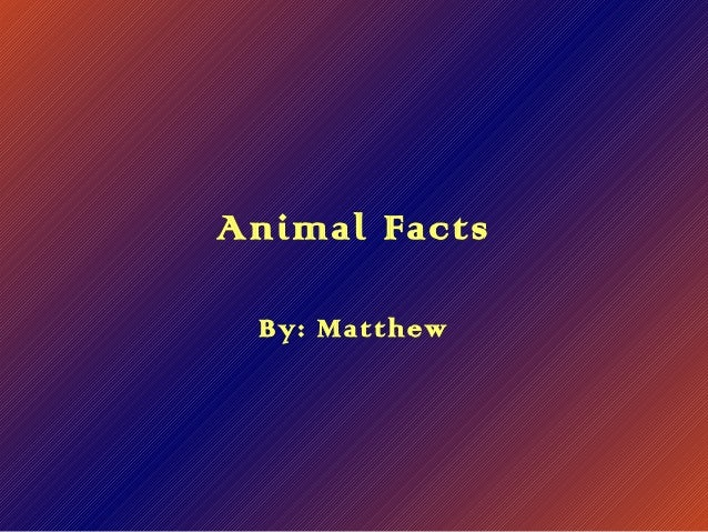 Animal Facts By: Matthew