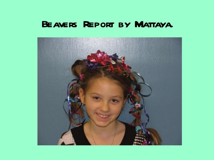 Beavers Report by Mattaya.