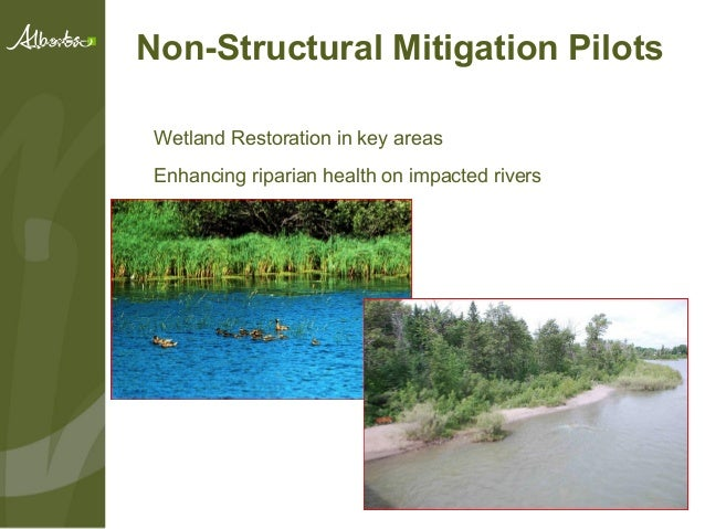 wetland restoration essay While widespread wetland destruction could unleash the mother of all carbon bombs, scientists are discovering that the restoration of these vulnerable ecosystems could provide a valuable bulwark to climate change by creating a.