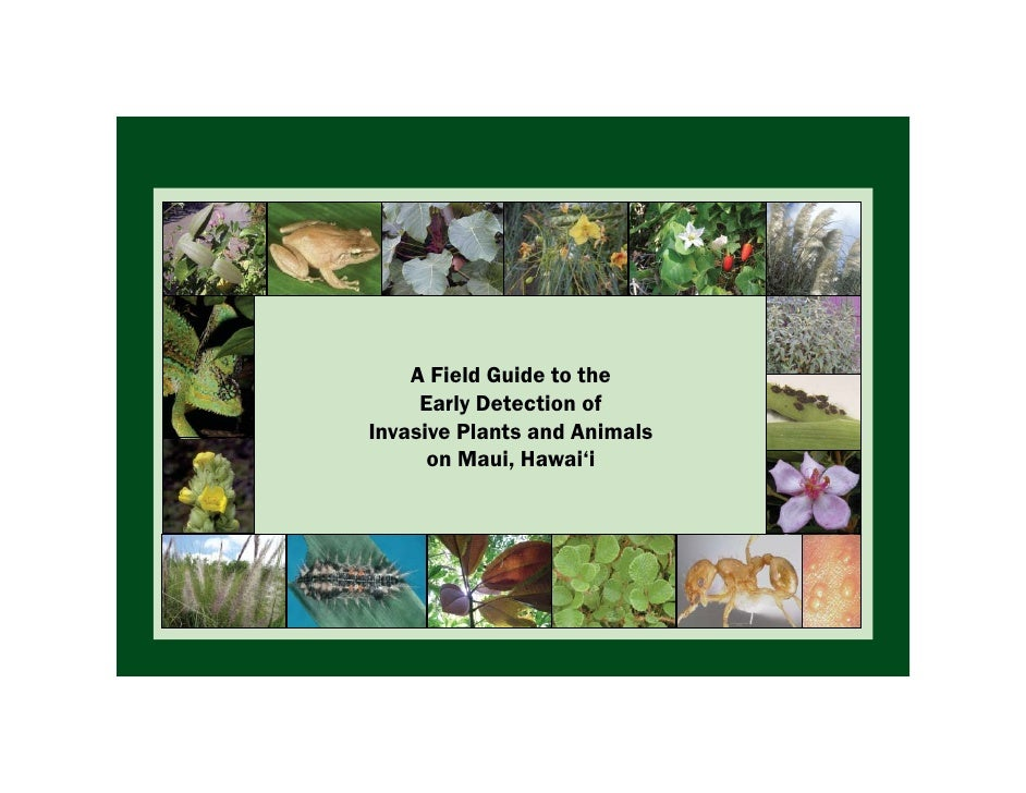 A Field Guide to the      Early Detection of Invasive Plants and Animals       on Maui, Hawai'i