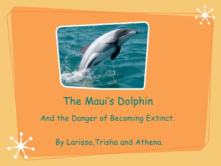 The Maui's Dolphin By Larissa,Trisha and Athena.  And the Danger of Becoming Extinct.