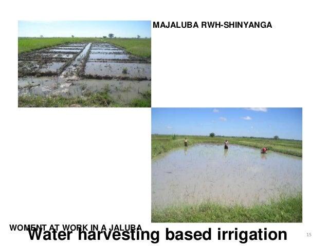 MAJALUBA RWH-SHINYANGA WOMENT AT WORK IN A JALUBA Water harvesting based irrigation 15