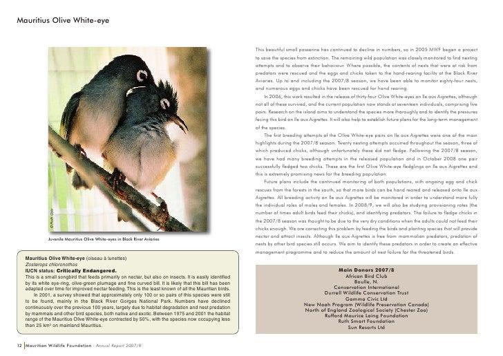 Mauritian wood pigeon