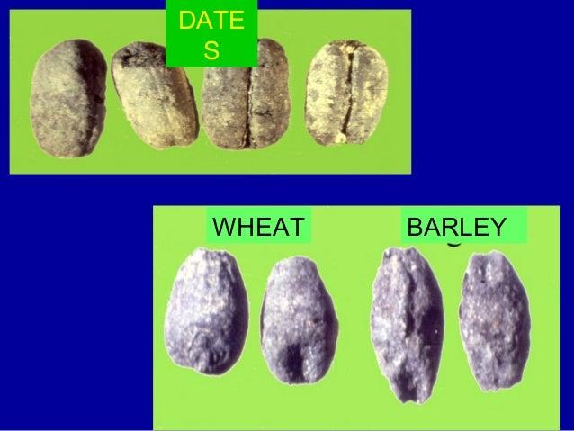 I resti corrispondenti sono distribuiti in tre fosse Le fosse contengono i resti di circa 400 individui, maschi e femmine ...