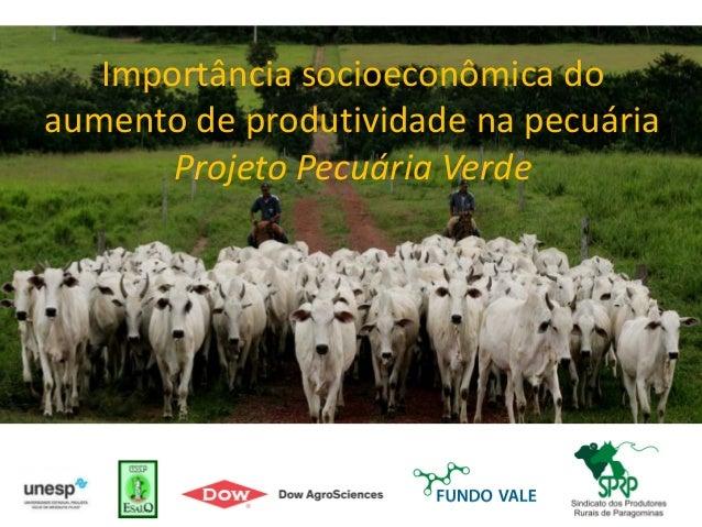 Importância socioeconômica do aumento de produtividade na pecuária Projeto Pecuária Verde