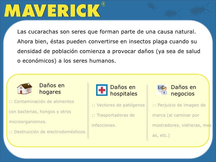 Cebo Gel Cucarachicida Maverick Slide 2