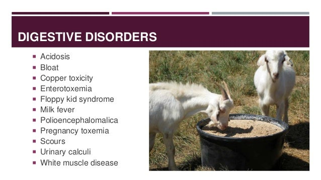 On Overview Of Disease Conditions In Small Ruminants