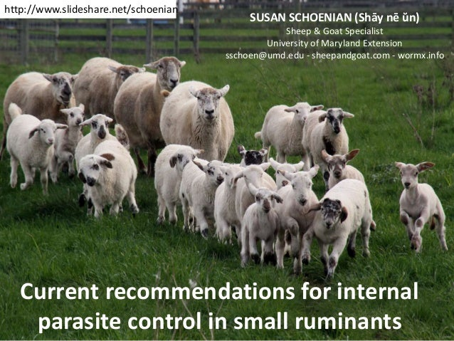 Current recommendations for internal parasite control in