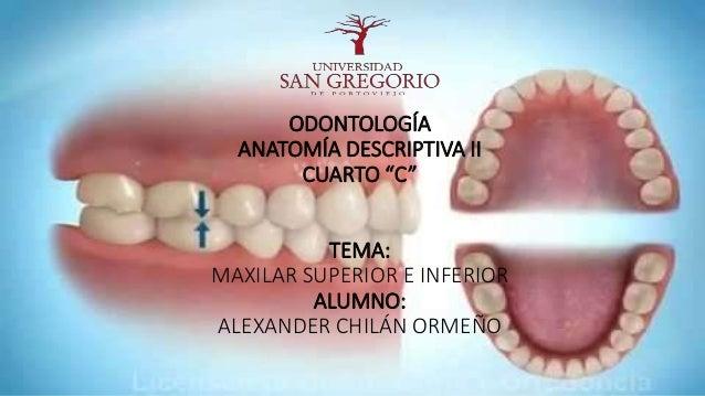 Maxilares Superiores E Inferiores Anatomia