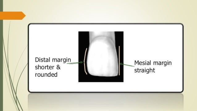 Maxillary central incisor (ORAL ANATOMY)