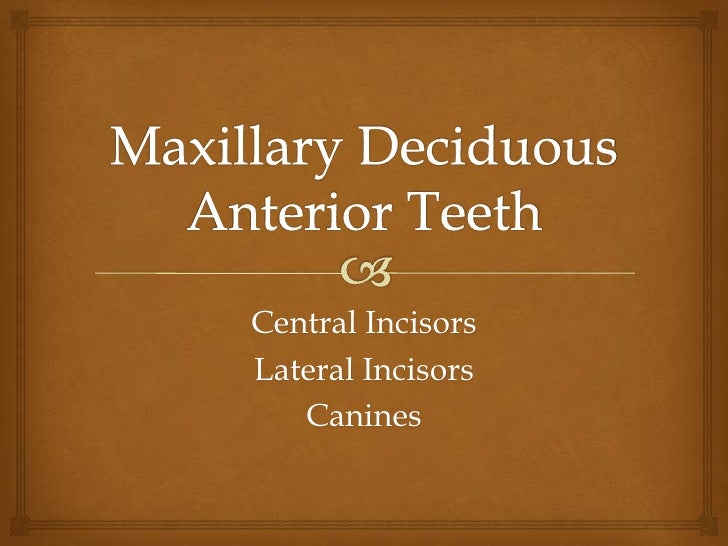 Maxillary Deciduous Anterior Teeth<br />Central Incisors<br />Lateral Incisors<br />Canines<br />