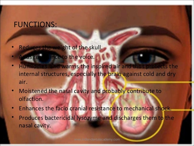 Maxillary sinus /certified fixed orthodontic courses by ...  Pansinusitis