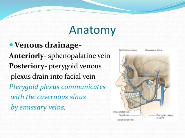 Maxillary Sinus Pptx Gaurav