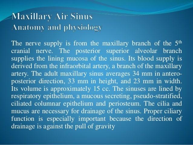 Maxillary sinus boundaries in dating