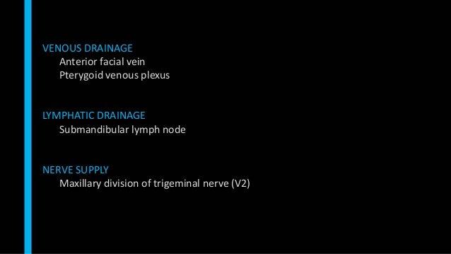 VENOUS DRAINAGE Anterior facial vein Pterygoid venous plexus LYMPHATIC DRAINAGE Submandibular lymph node NERVE SUPPLY Maxi...