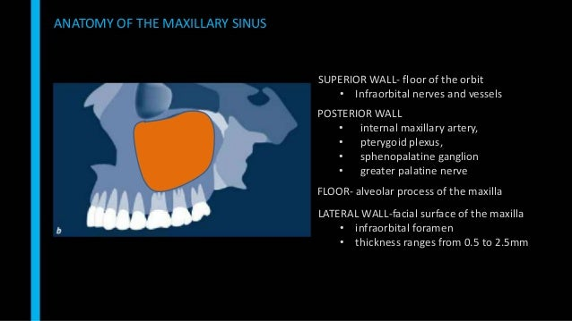 Sinus Floor Elevation Systematic Review : Maxillary sinus floor elevation