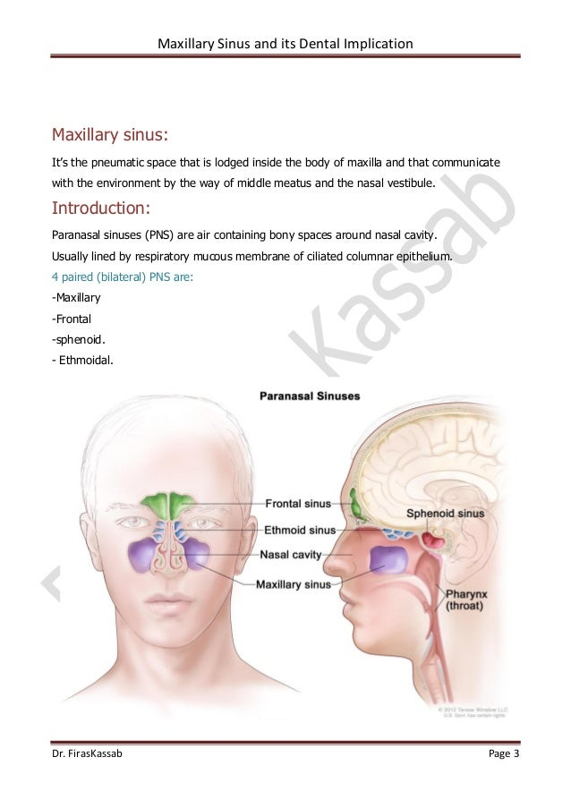 Maxillary sinus boundaries in dating