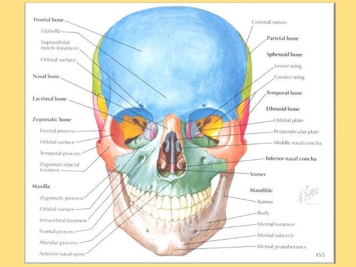 Oral and Maxillofacial Surgery - Advanced Facial and Oral Surgery