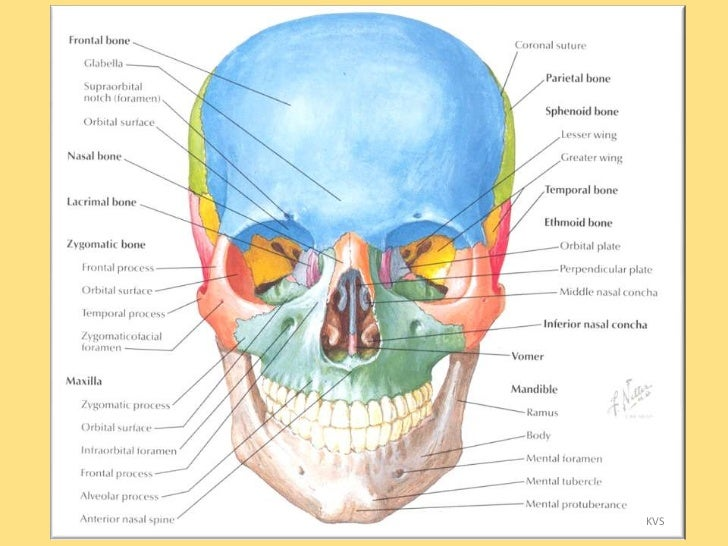 Oral and Maxillofacial Surgery - Advanced Facial and Oral Surgery