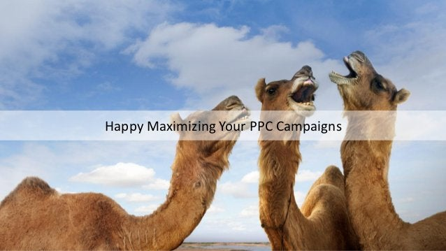 Maximize PPC Campaigns
