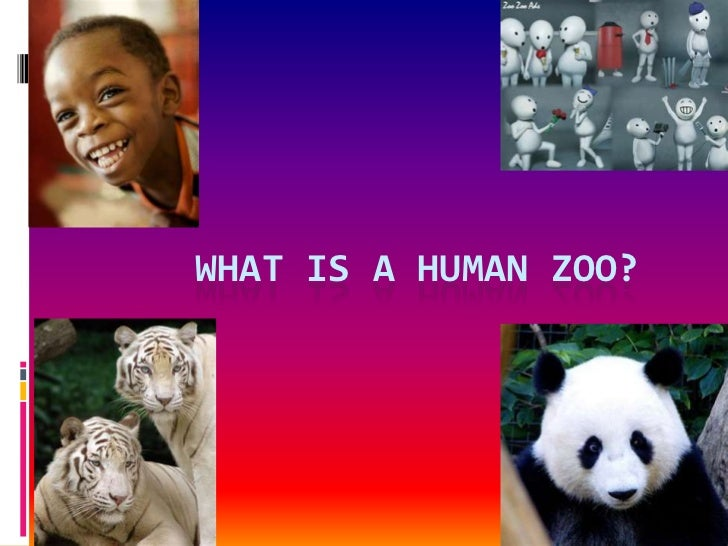 What is a human zoo?<br />