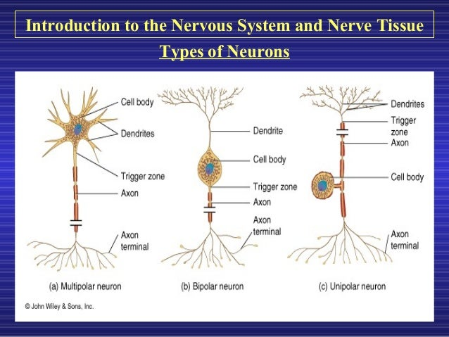 an introduction to the analysis of nervous system To introduce some basic concepts of neurophysiology and neuroanatomy in this packet i discuss nervous tissue and introduce the general anatomy of the nervous system.