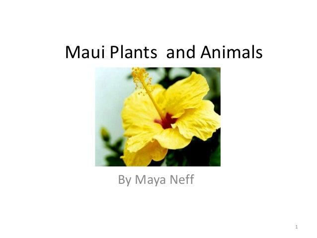 Maui Plants and Animals  By Maya Neff  1