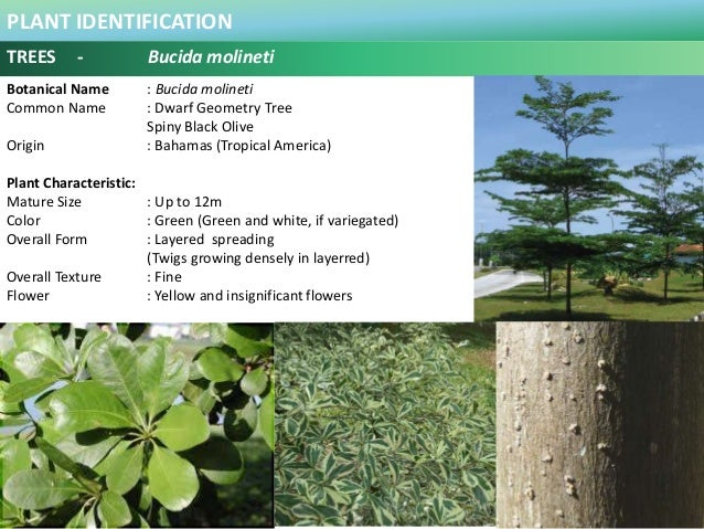 100 plus plants identification in malaysia plant identification trees mightylinksfo