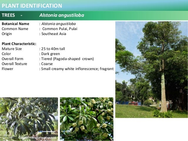100 Plus Plants Identification in Malaysia
