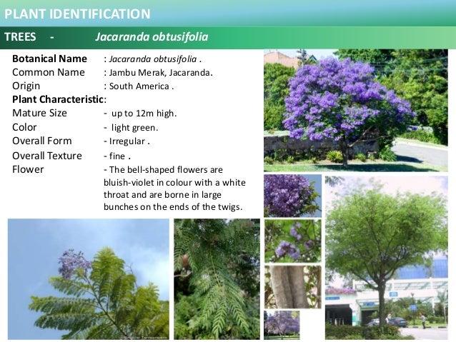 100 plus plants identification in malaysia 47 plant identification mightylinksfo