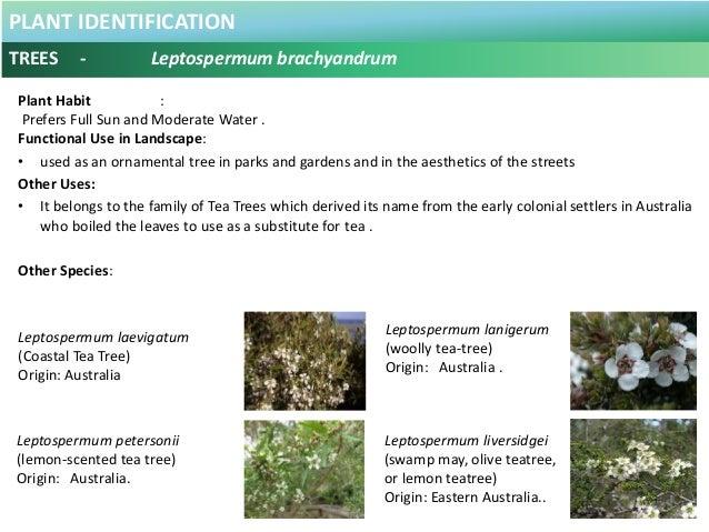 100 Plus Plants Identification in Malaysia