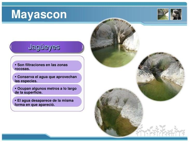 Algarrobo<br />Palo santo<br />Flora<br />Palo Verde<br />Hualtaco<br />