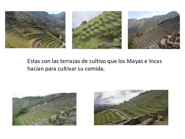 Mayas E Incas
