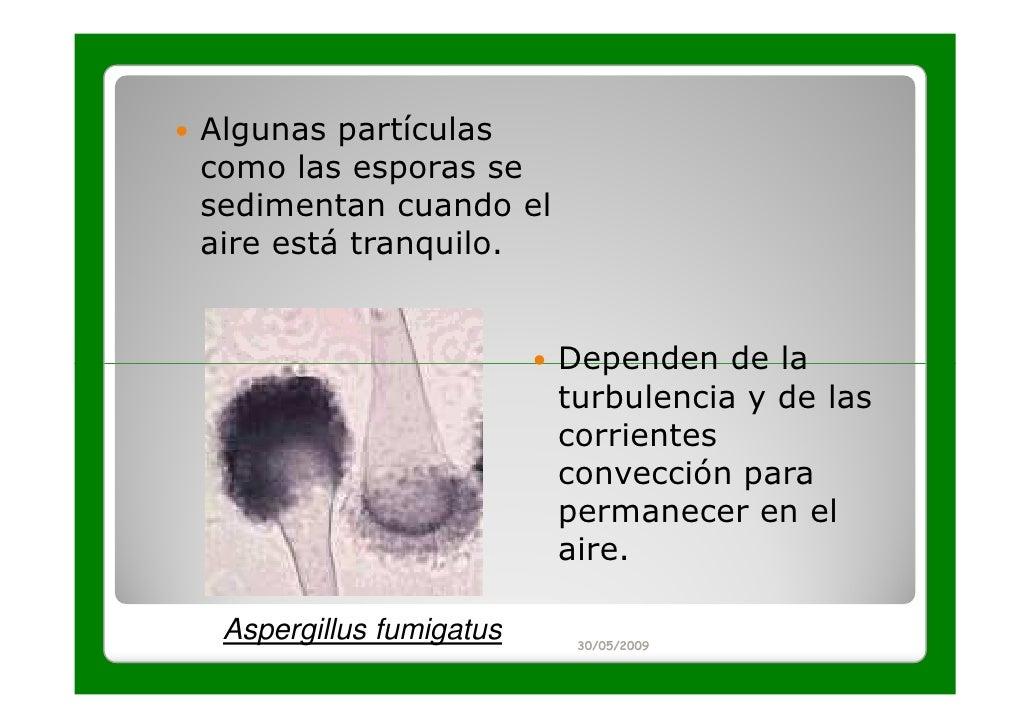 Algunas partículascomo las esporas sesedimentan cuando elaire está tranquilo.                         Dependen de la      ...