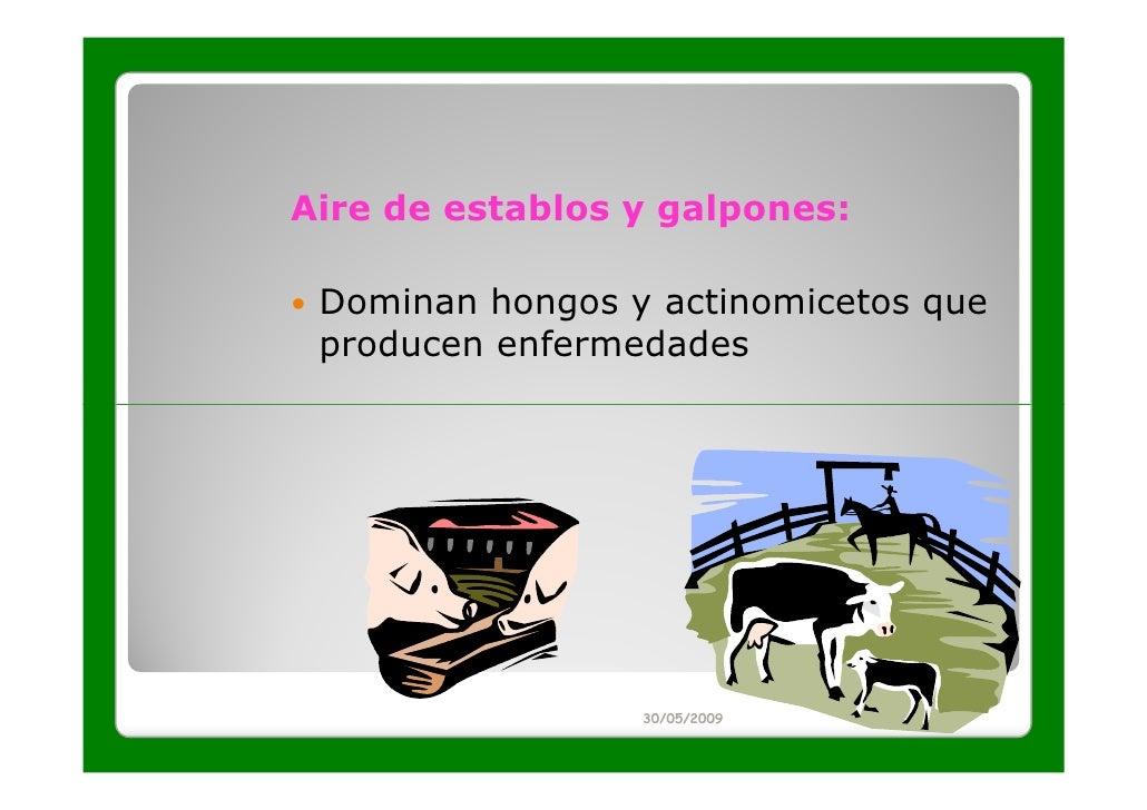 Aire de establos y galpones: Dominan hongos y actinomicetos que producen enfermedades                 30/05/2009