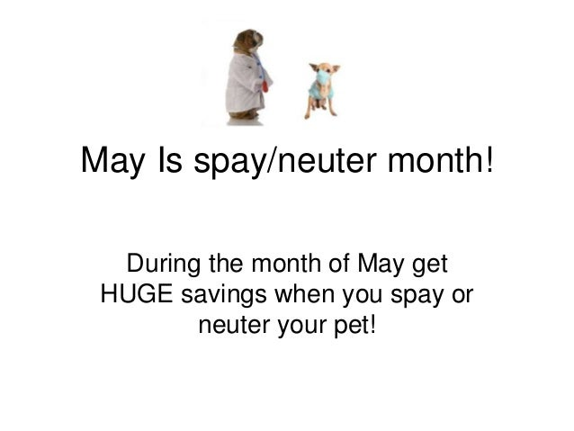 May Is spay/neuter month! During the month of May get HUGE savings when you spay or neuter your pet!
