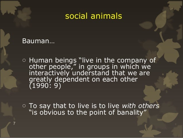 """social animals Bauman… o Human beings """"live in the company of other people,"""" in groups in which we interactively understan..."""