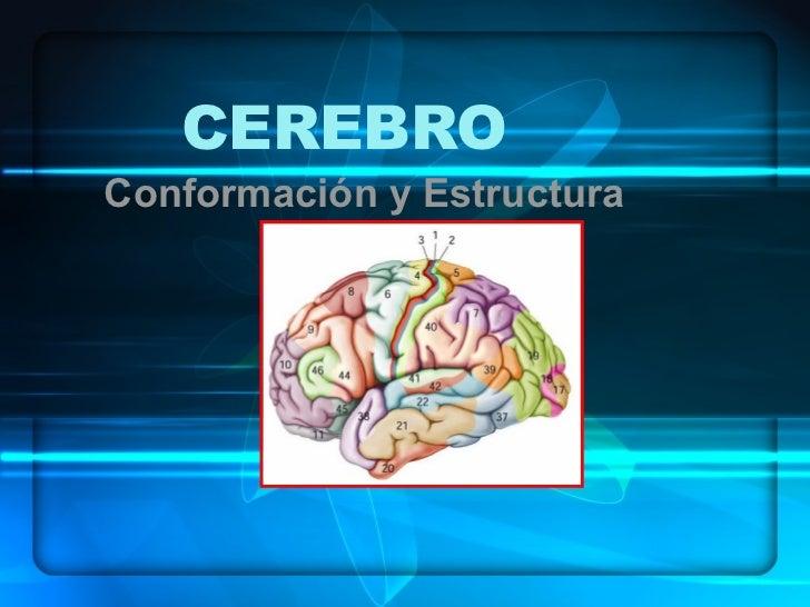 CEREBROConformación y Estructura