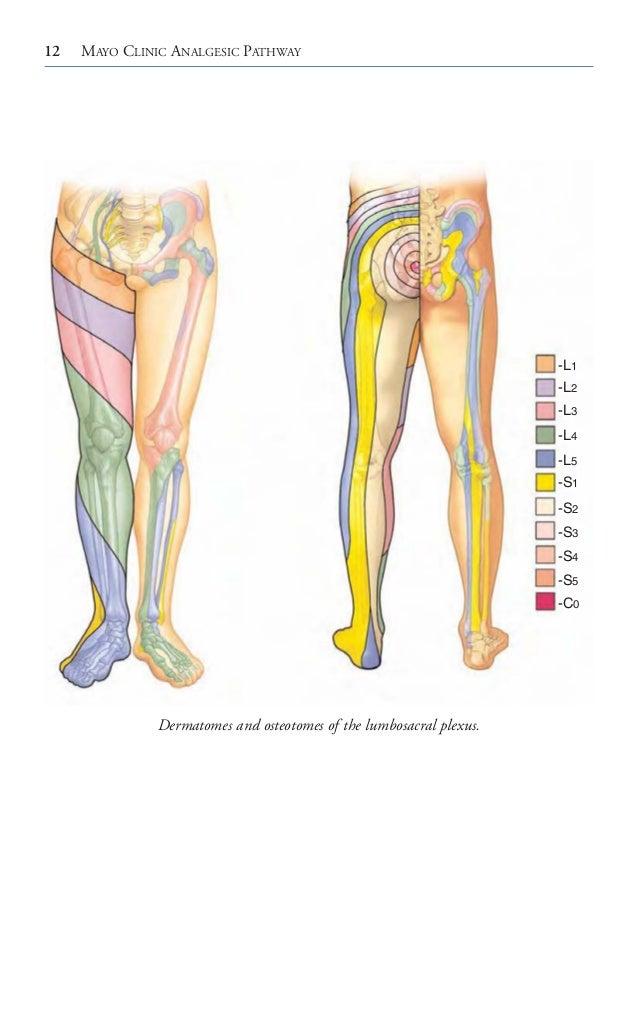 Mayo clinic analgesic pathway peripheral nerve blockade