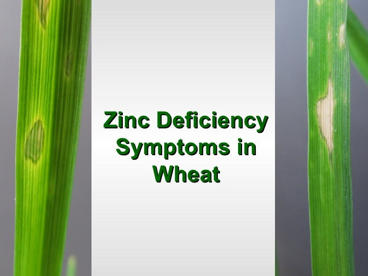 Global vision on zinc for Soil zinc deficiency