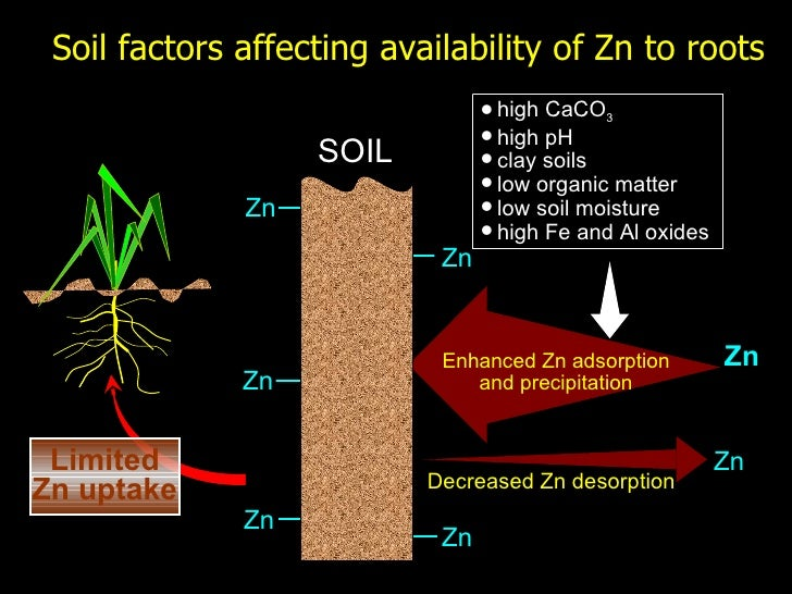 Global vision on zinc for Soil factors
