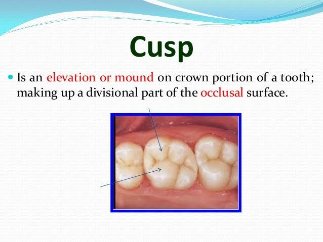 Mazen doumani dental anatomy