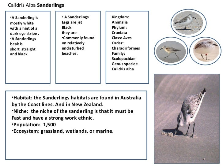 Mbfs student field guide 3 8 sciox Gallery